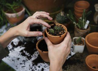 Jak przygotować ogród na wiosnę? Porady eksperta